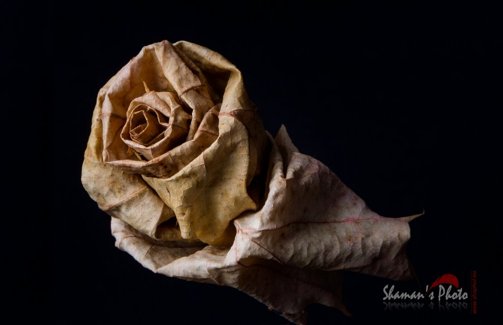 Flower - Dried Leaf
